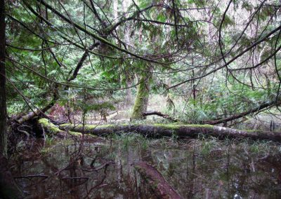 A rare ecosystem type in the southern Gulf Islands